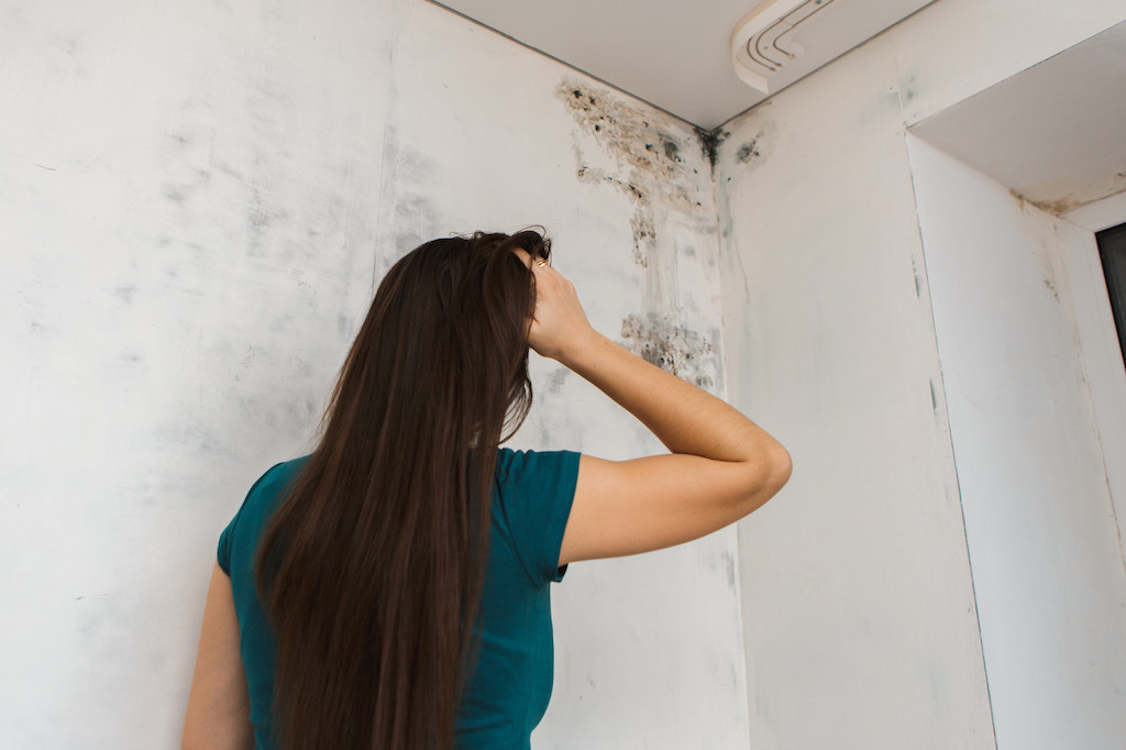 What Causes Mold in Homes?