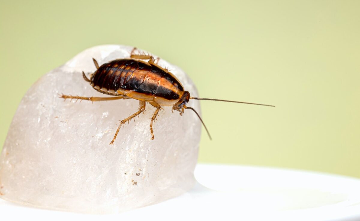 Pest Free Kitchen