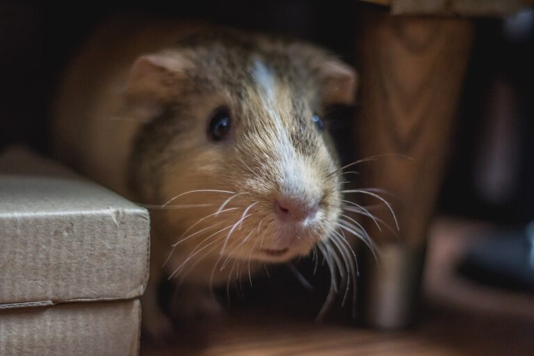 Best Ways to Keep Deer Mice Out of Your Kitchen